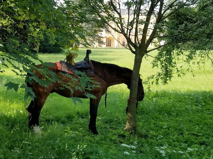 A horse under the shade of a tree. Czech It Out Europe Château Lawn Tree Tree Trunk Nature Green Architecture Building Exterior Exterior View Outdoors Shade Light And Shadow Sunlight Tree Field Full Length Grass Horse Bridle Saddle