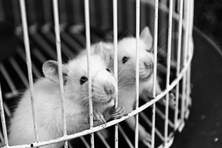 Cage Animal Themes Caught My Eye Wants Freedom Help Me !! Black And White Fresh On Eyeem
