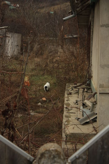 High angle view of birds in abandoned building