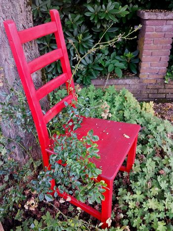 Red Chair Have A Seat Take A Seat Come And Sit With Me For A While... Still Life Stillleben Mit Rotem Stuhl Chair Art Mit Rosenpflanze Bewachsener Roter Stuhl Beautiful Scenery Bushes And Trees Red And Green Ladyphotographerofthemonth Showcase August Street Photography Relaxing The Street Photographer - 2017 EyeEm Awards