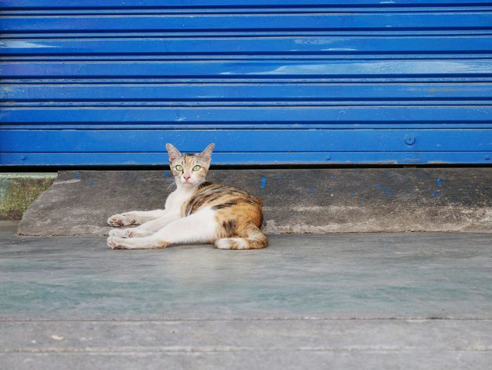 Portrait of cat resting on footpath