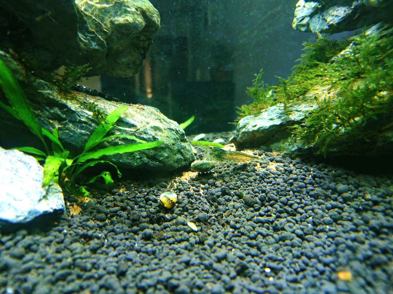 animal themes, one animal, animals in the wild, green color, no people, rock - object, day, nature, animal wildlife, moss, outdoors, close-up, water, underwater, sea life, beauty in nature, undersea