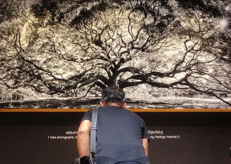 See Exhibition Thailand Streettun Tree