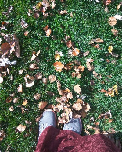 Autumn tree leaves Autumn Leaves Low Section Human Leg Shoe High Angle View Real People One Person Standing Grass Outdoors first eyeem photo