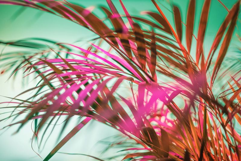 Studio Shot No People Close-up Plant Studio Neon Lights Hotpink Freshness Neon