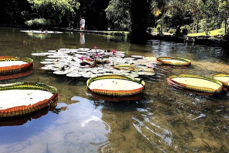 Jardim Botânico Rj Water Reflection Nature Wet No People Plant Day