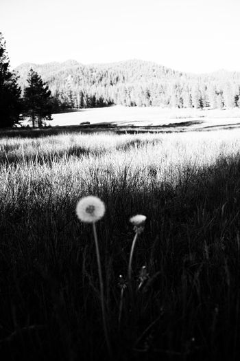 Nature Growth Field Grass Outdoors No People Day Beauty In Nature Plant Rural Scene Close-up Tree Fragility Freshness Sky Black & White By Tisa Clark Dark By Tisa Clark🌑🌌 Naturescapes 🌻 By T.Clark