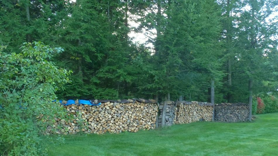 Cords of wood in various stages of curing through the summer months Woodpile Chopped Wood Winter Preparations Summertime Stockpiling Stockpile Wood Landscaping Firewood Maine New England Living Maine Life Winter Preparation Lawns Green Grass Backyard Backyard View