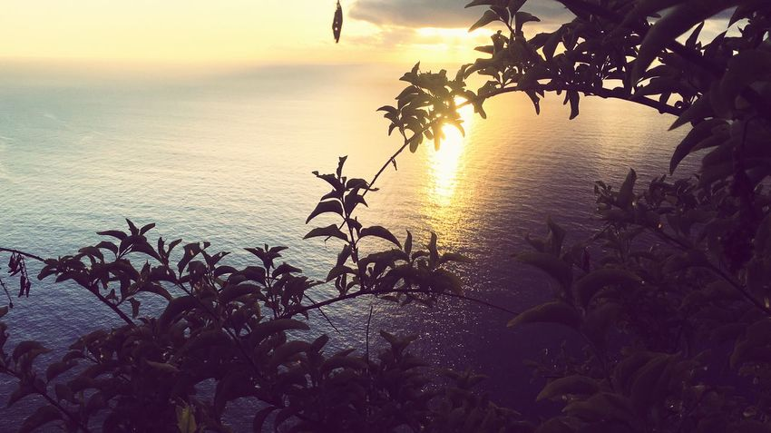 Sunset Sky Plant Nature Silhouette Beauty In Nature Water Tree Sea Orange Color Sun Scenics - Nature Tranquil Scene No People Growth Outdoors Beach Sunlight Tranquility