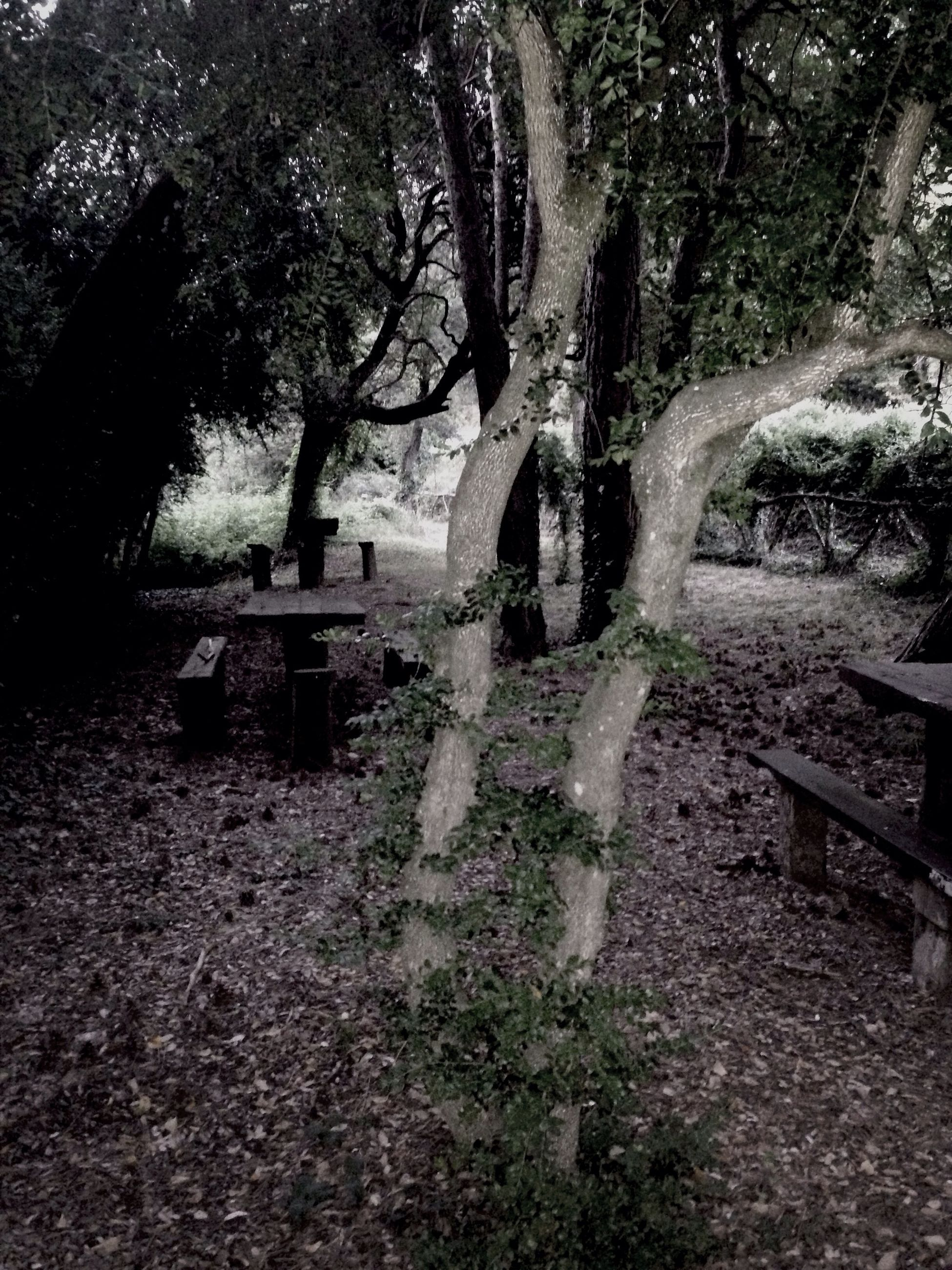 tree, tree trunk, forest, tranquility, growth, built structure, nature, branch, tranquil scene, architecture, day, park - man made space, sunlight, outdoors, abandoned, woodland, shadow, old, no people, beauty in nature