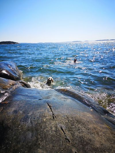 Summer Ocean Swimming Dog Swimming Man Swimming Stockholm Sweden Travel Destination Vacations Water Sea Clear Sky Beach Wave Sea Life UnderSea Sky Horizon Over Water Animal Themes Seascape Coast Rocky Coastline Rugged Boulder Surf