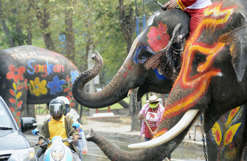 Elephant with ceremonial make-up on street