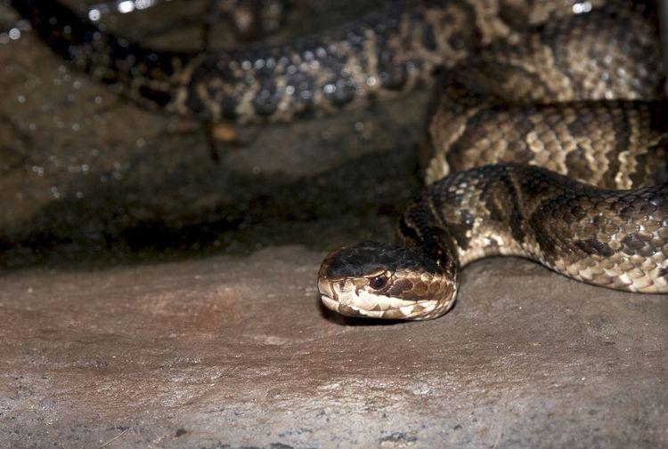 Close-up of snake on ground