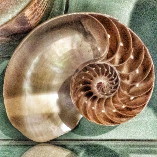 Natural Beauty Shell
