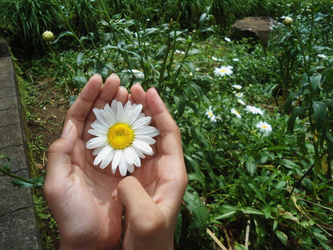 When I was younger, I took this picture of my sister holding a flower Flower One Person Nature Summer Outdoors Flower Head Beauty In Nature Fragility Child Freshness Flowers Garden Hand And Flower Hand Holding Flower EyeEmNewHere Be. Ready.