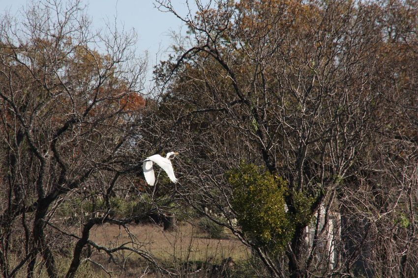 Bird Tree Animal Themes Animals In The Wild Nature One Animal Flying Growth Animal Wildlife Low Angle View No People Outdoors Stork Branch Day Beauty In Nature Swan