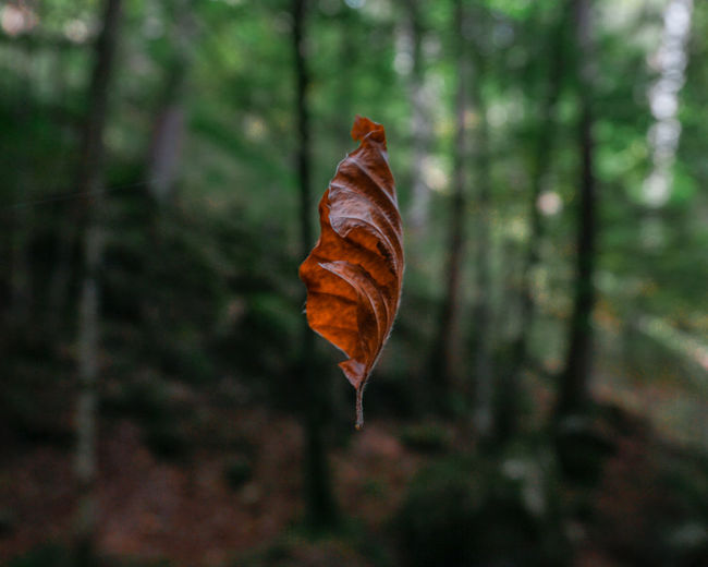 Leaf in mid-air at forest