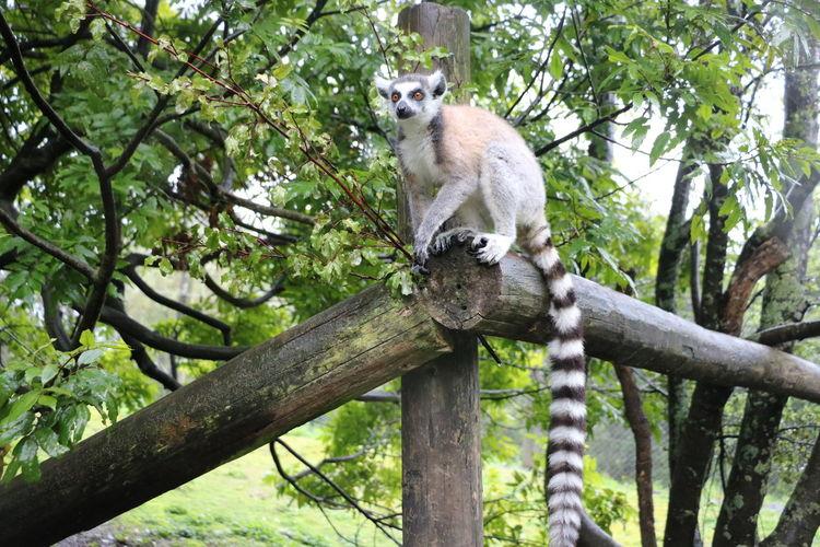 One Animal Tree
