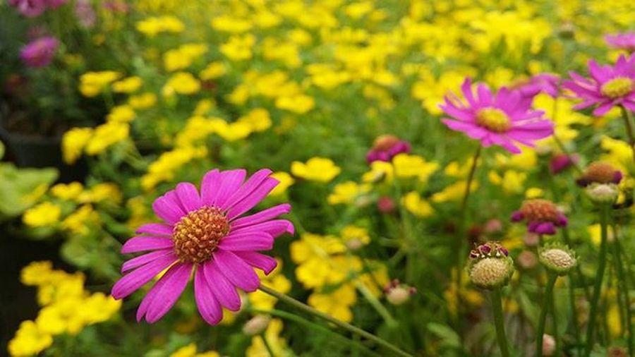 Beautiful flowers 🌸🌿🌾 Flowers Flowershop Purple Purpleflowers Yellow Yellowflower Yellowflowers Nature Complementarcolors Beautiful
