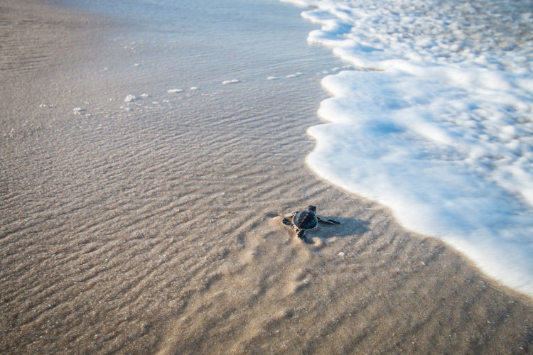 High angle view of sea turtle at beach