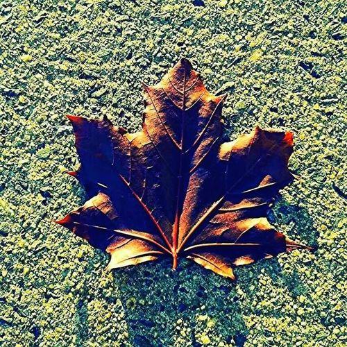 Autum in Canada Enjoying Life First Eyeem Photo