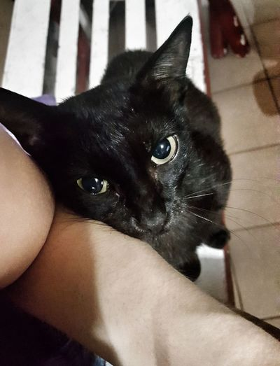 When the cat is trying to be cute. Lol (:  Cute Pets Cute Cute Cats Animals Domestic Animals Domestic Cat Pets Cat Black BLackCat BlackeyesBigeyes Eyes Sweet Purr Taking Photos Random Randomshot Hello World Enjoying Life Cheese! Check This Out Smile EyeEm