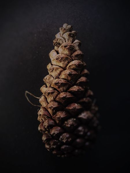 Pine Cone Close Up Pine Cone Brown Colours Brown Dark Darkness And Light Dark And Light Light And Shadow Light In The Darkness