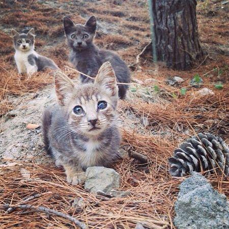 Showing Imperfection Cat Kitty Kitten Homeless Homeless Cats Wild Wild Cats Wild Cat Poor Kittie Poor  Eyeemphoto