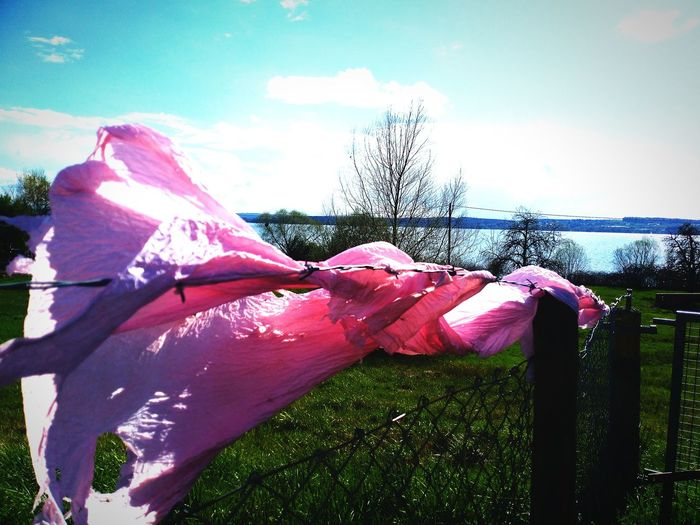 Lake Constance / pink plastic Windy Day Approaching From Another View Horizon Over Water End Plastic Pollution