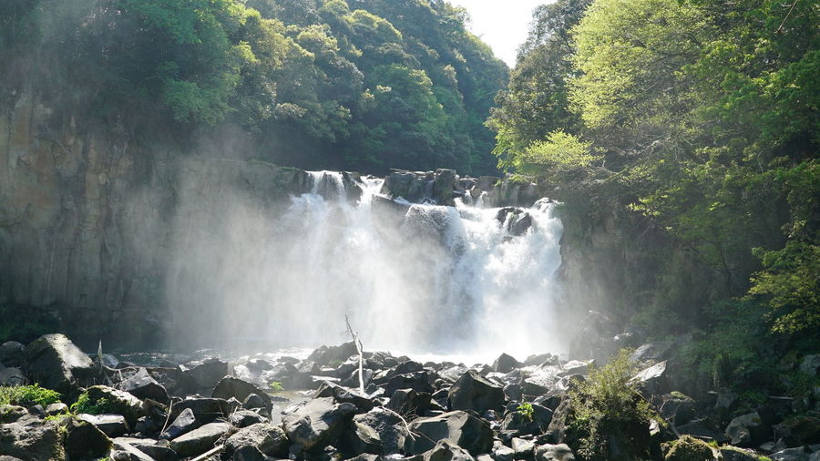 Beauty In Nature Day Forest Growth Long Exposure Motion Nature No People Outdoors Scenics Tree Water Waterfall Japan Sky Japan Photography Cool Rest Cooling  Japan Culture Japan Photos Japan Style Japan Scenery Japan Nature