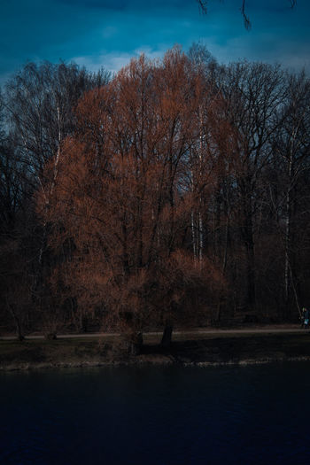 Bare trees by lake against sky during autumn