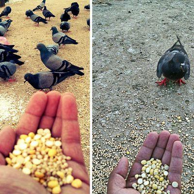 Lovely pigeons.. Sankey Bangalore F4F Followforfollow Birdsofinstagram