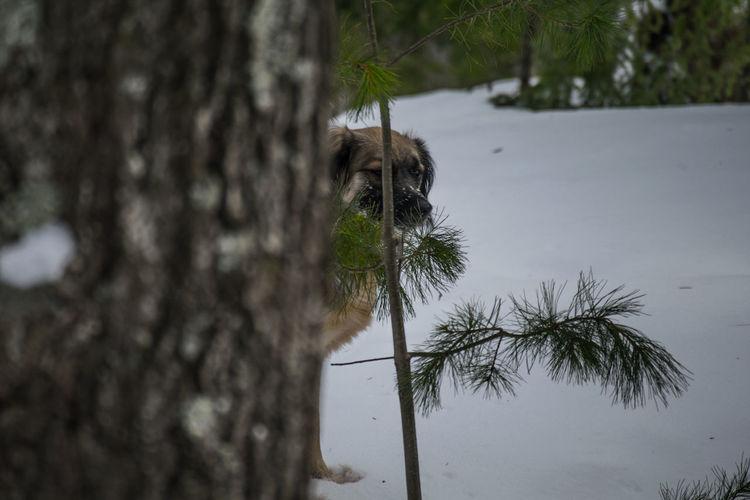 Dog Dogs Dogsofeyeem Michigan Nature Scenics Snow Upper Mi Views Winter