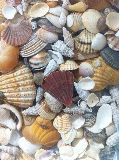 365project Shells