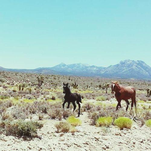 Baby Baby And Mama Wild Horse Running Enjoying Life Country Life Summer Awww