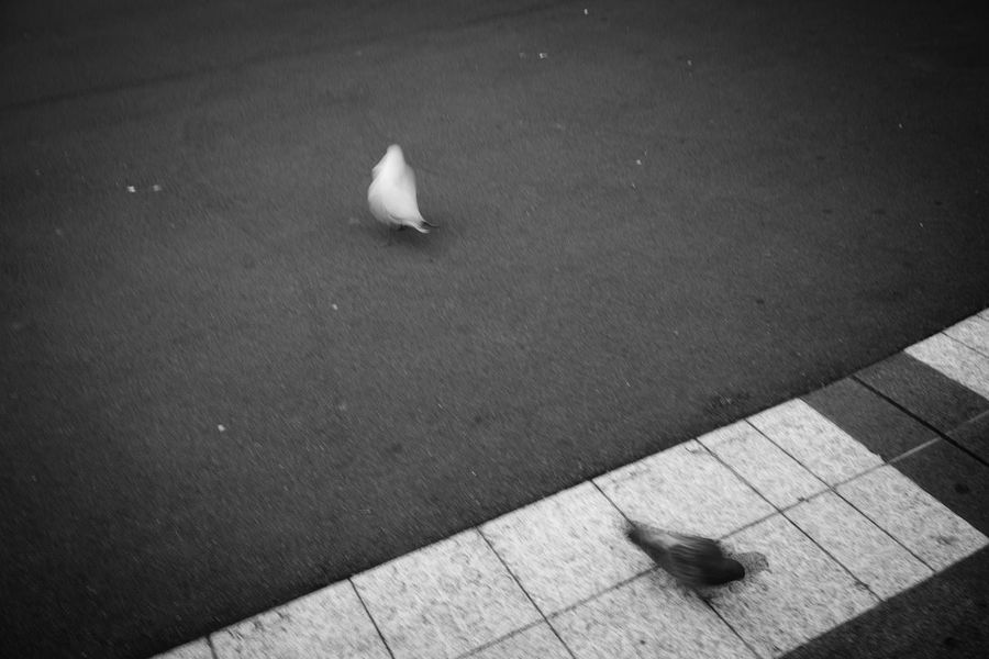 Yin & Yang - Inner City Harmony Birds Black & White Black And White Central Station City City Life Pavement Street Streetphotography Yin & Yang Yinyang Monochrome Photography Adapted To The City
