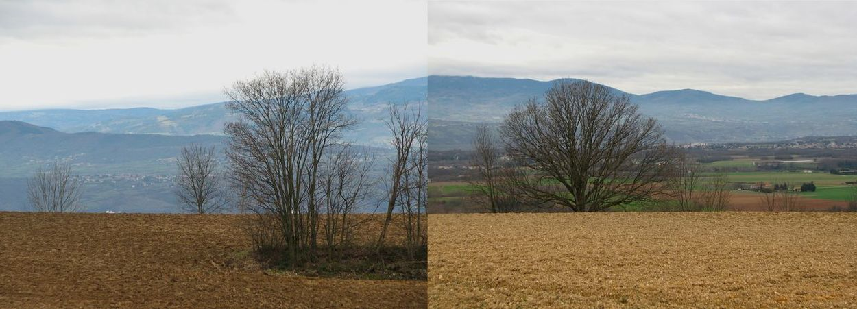 Two photos. Bare Tree Collage First Eyeem Photo Isere  Landscape Monts Du Pilat No Filter No People Panorama Rural Scene Winter Trees