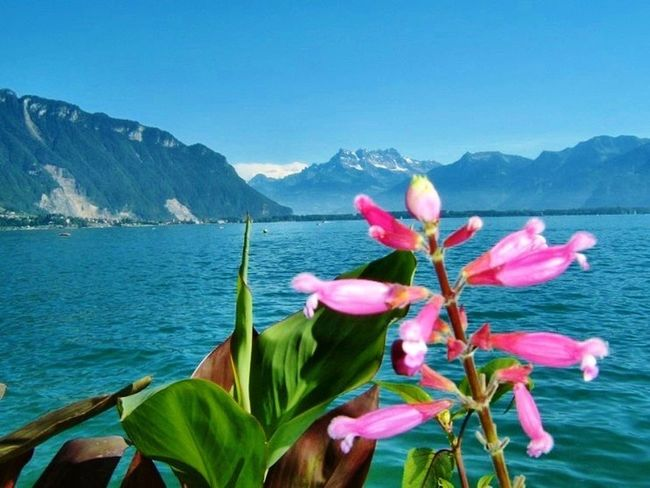 Travel Photography Holiday Trip Swiss Photos Montreux Switserland Warking Around City Street Leman Lake Vevey
