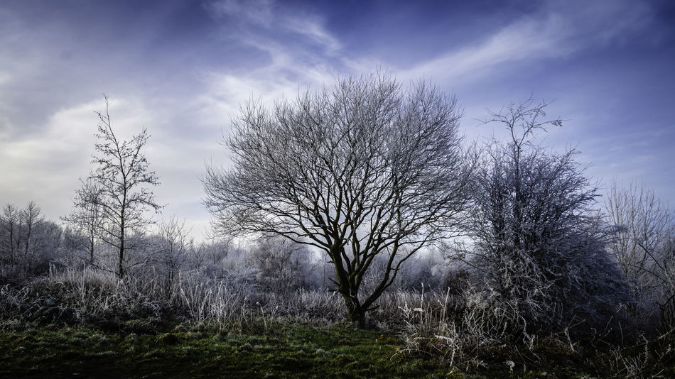 Hoar Frost Beauty In Nature Cloud - Sky Landscape Nature No People Outdoors Sky Tranquility Tree