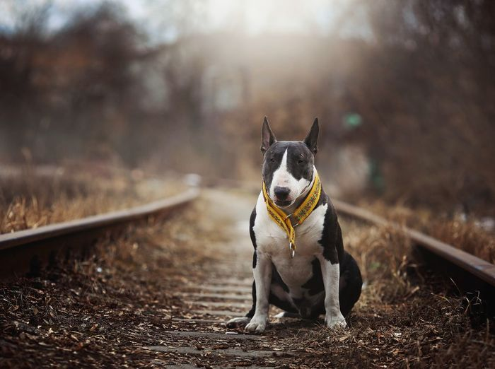 Portrait of dog looking away on land