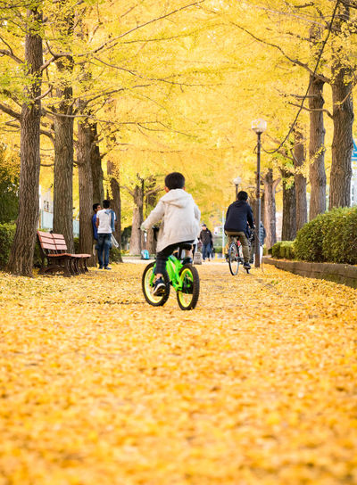People on footpath amidst yellow trees at park during autumn