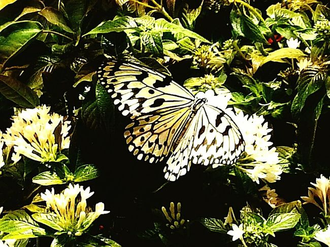 Butterfly ❤ Museum Of Natural History