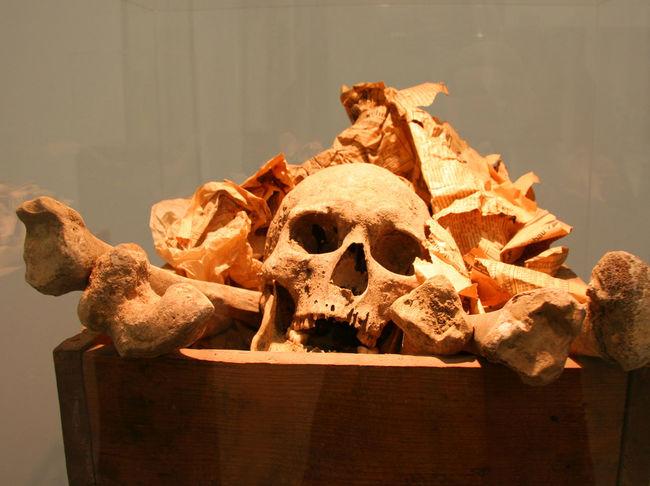 Skeleton in a box Biography Bones Box Close-up Concept Conceptual Crime Dead Death Excavation Exhumation Front View Grave Human Bone Human Skeleton Human Skull Memories One Person Skeleton Skeletons Skull Skulls Skulls And Bones Spooky The End