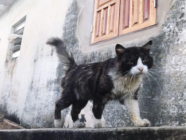 The cat Domestic Cat Feline Pet Portraits