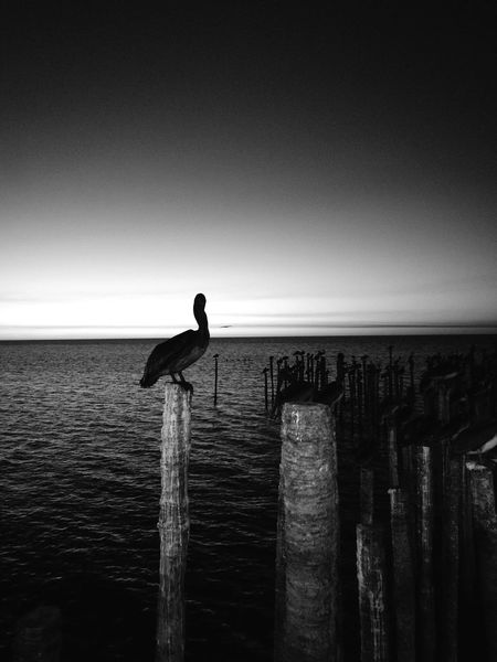 Champotón Beauty In Nature Blue Reflection Cloud - Sky Sky Water Blackandwhite Pelican Bird Sea Miles Away