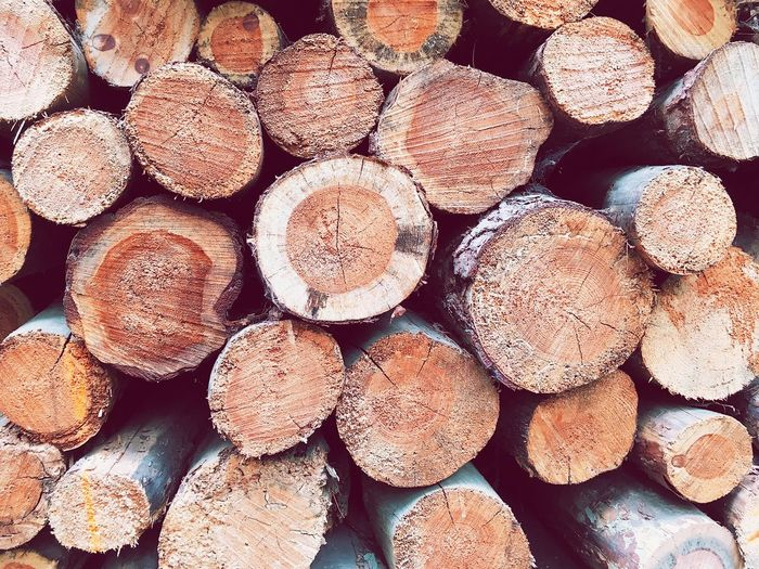 Full Frame Backgrounds Large Group Of Objects Abundance Log Timber Wood No People Deforestation Wood - Material Lumber Industry Day Close-up Nature Arrangement Forest