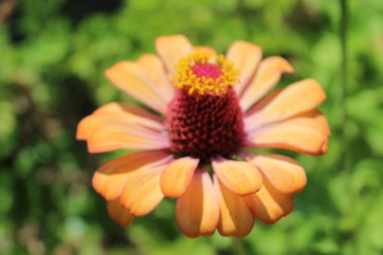 Flower - Baia