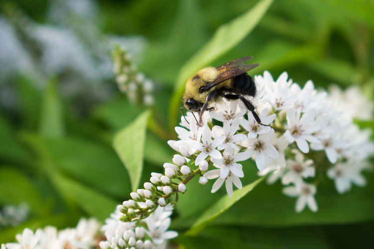 Animal Themes Animal Wildlife Animals In The Wild Beauty In Nature Beauty In Nature Bee Bees And Flowers Bumblebee Close-up Day Flower Flower Head Fragility Freshness Growth Insect Nature No People One Animal Outdoors Petal Plant Pollination Save The Bees Wildlife EyeEm Selects EyeEmNewHere