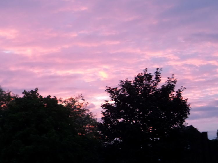 Scenic. Atmospheric. Late Evening Sky. No People. Beauty In Nature Diamond Pattern Pink. Colour. Skycape. Pink Sky. Silhouette. Sundown...♥ Trees.