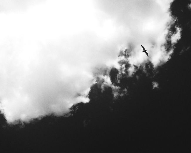 Pantech Phone Flying Sky Cloud - Sky Bird Nature Animal Themes EyeEmNewHere USA New Hampshire Blackandwhite